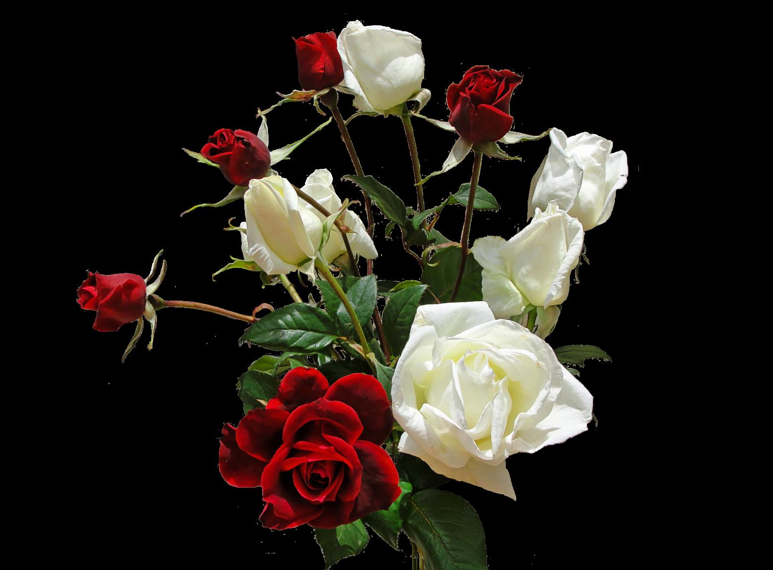 Cliparts rose blanche image transparent bouquet de roses rouges et blanches images gratuites   images ... image transparent