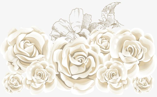 Cliparts rose blanche banner transparent White Roses, Vector Rose, Rose Creative, Flowers PNG Transparent ... banner transparent