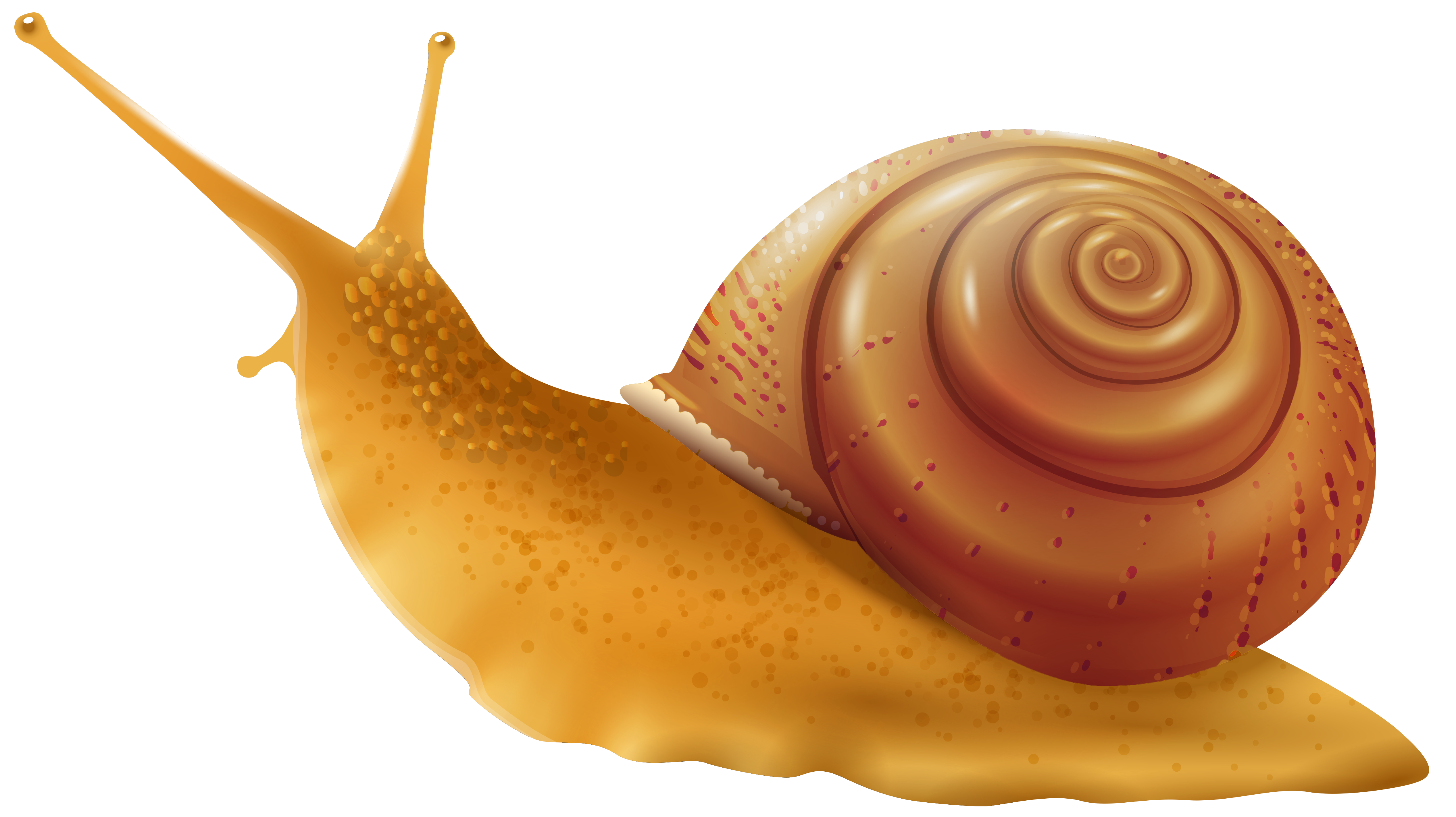 Cliparts snail vector library download Snail PNG Clip Art - Best WEB Clipart vector library download