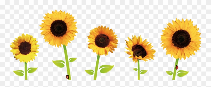 Cliparts sun flowers banner royalty free library Sunflowers - Sunflowers Tumblr Png Clipart (#777857) - PinClipart banner royalty free library