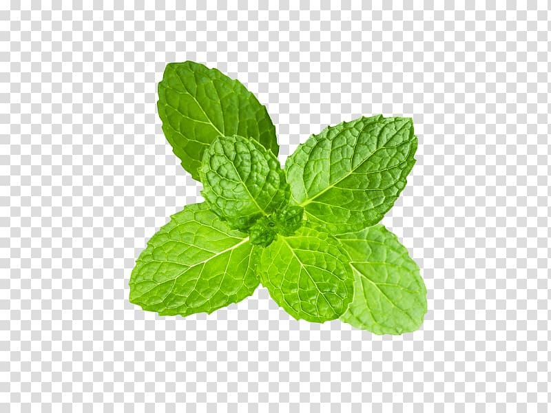 Clipping path clipart clipart black and white Peppermint Clipping path Mentha spicata, others transparent ... clipart black and white