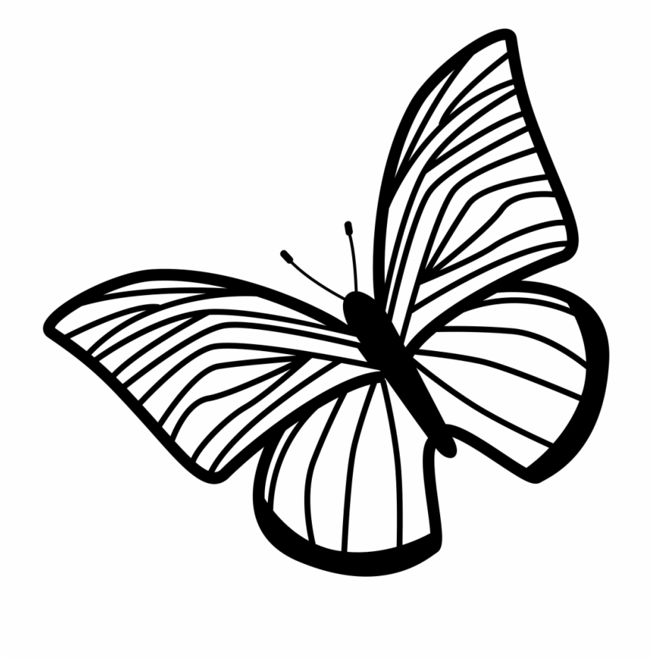 Clock with wings clipart clipart free download Butterfly Of Thin Striped Wings Rotated To Left Comments - Draw The ... clipart free download
