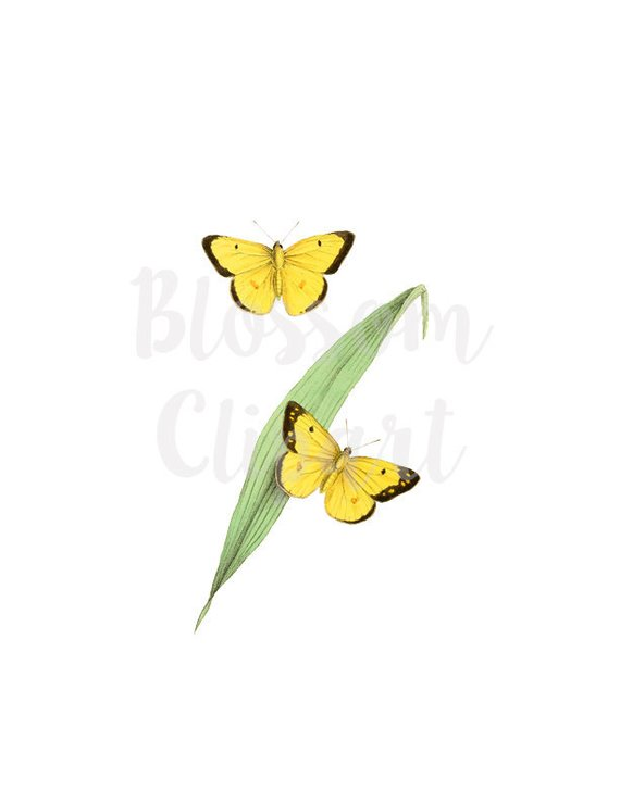 Cloudless clipart clip art library stock Printable Butterflies Clipart Vintage Butterfly Illustration for ... clip art library stock