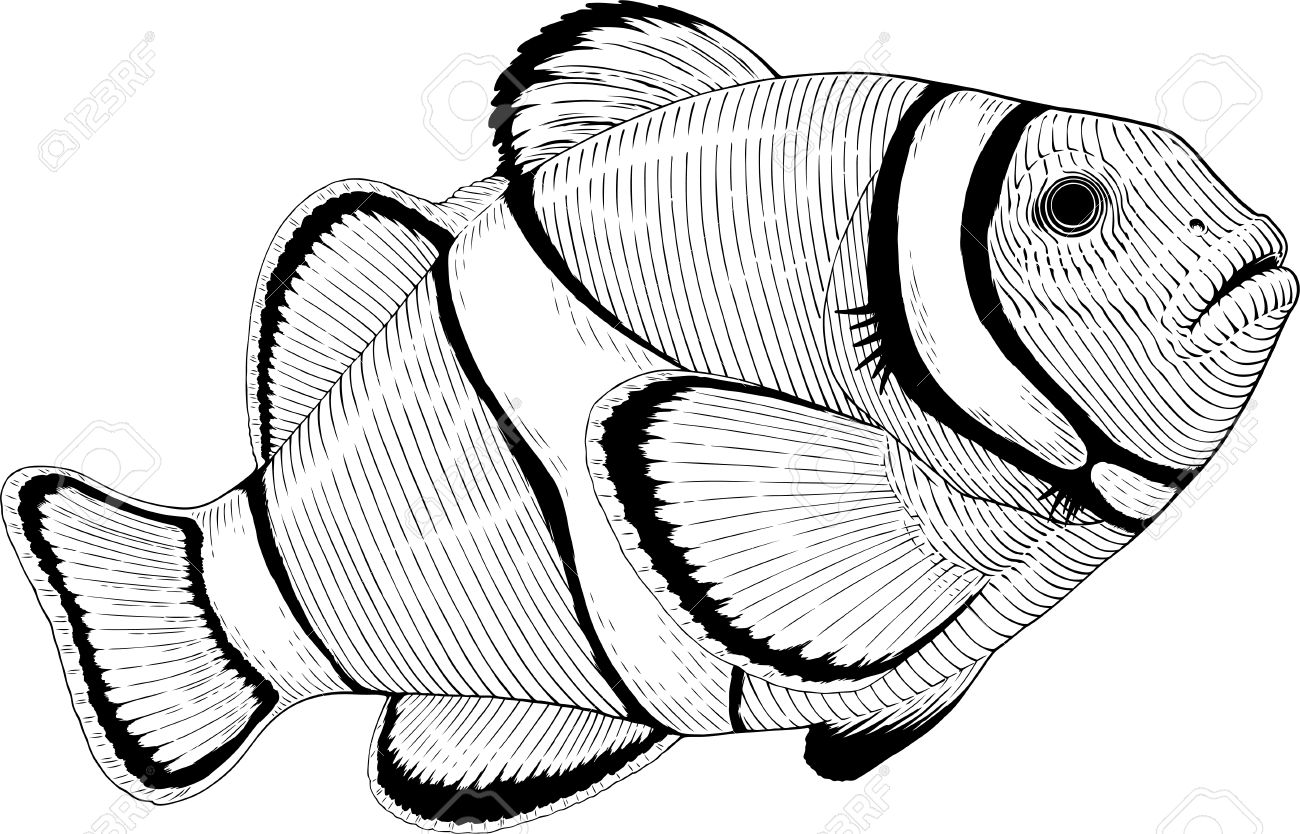 Clownfish clipart black and white clipart free download Clownfish clipart black and white 5 » Clipart Station clipart free download
