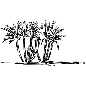 Clump clipart image black and white Tree clump clipart, cliparts of Tree clump free download (wmf, eps ... image black and white