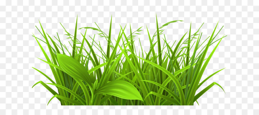 Clump clipart png free stock Grass Background png download - 678*381 - Free Transparent Blog png ... png free stock
