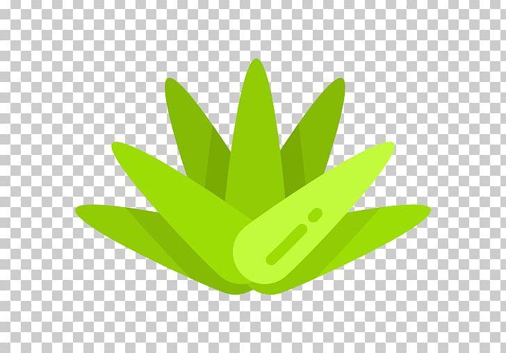 Coa clipart vector free stock Agave Scalable Graphics Euclidean Coa De Jima PNG, Clipart, Agave ... vector free stock