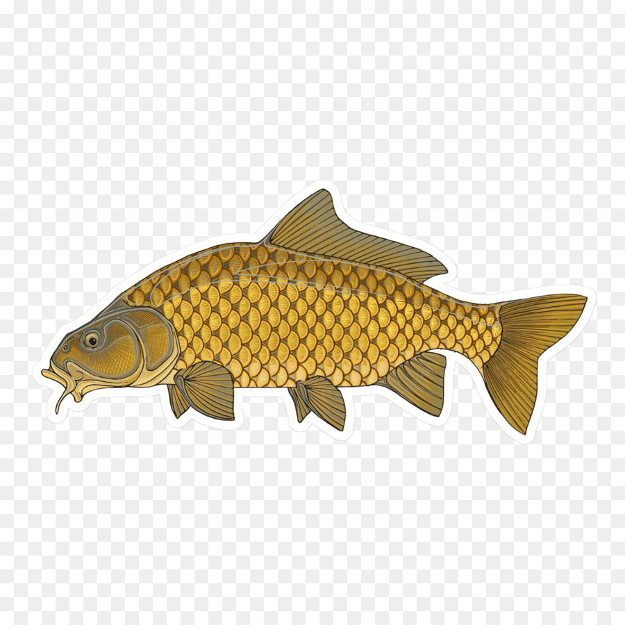 Coarse fishing clipart svg library stock Rainbow Clipart png download - 1024*1024 - Free Transparent Salmon ... svg library stock