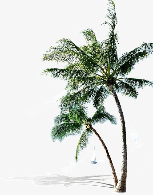 Coco palms clipart clip art transparent library Palm Beach PNG, Clipart, Beach, Beach Clipart, Coco, Palm Clipart ... clip art transparent library