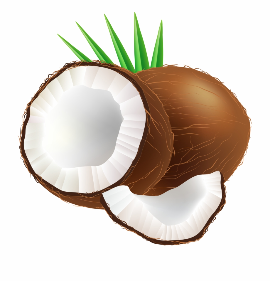 Coconut bikini clipart vector transparent download Png Free Images Toppng - Clip Art Of Coconut, Transparent Png ... vector transparent download