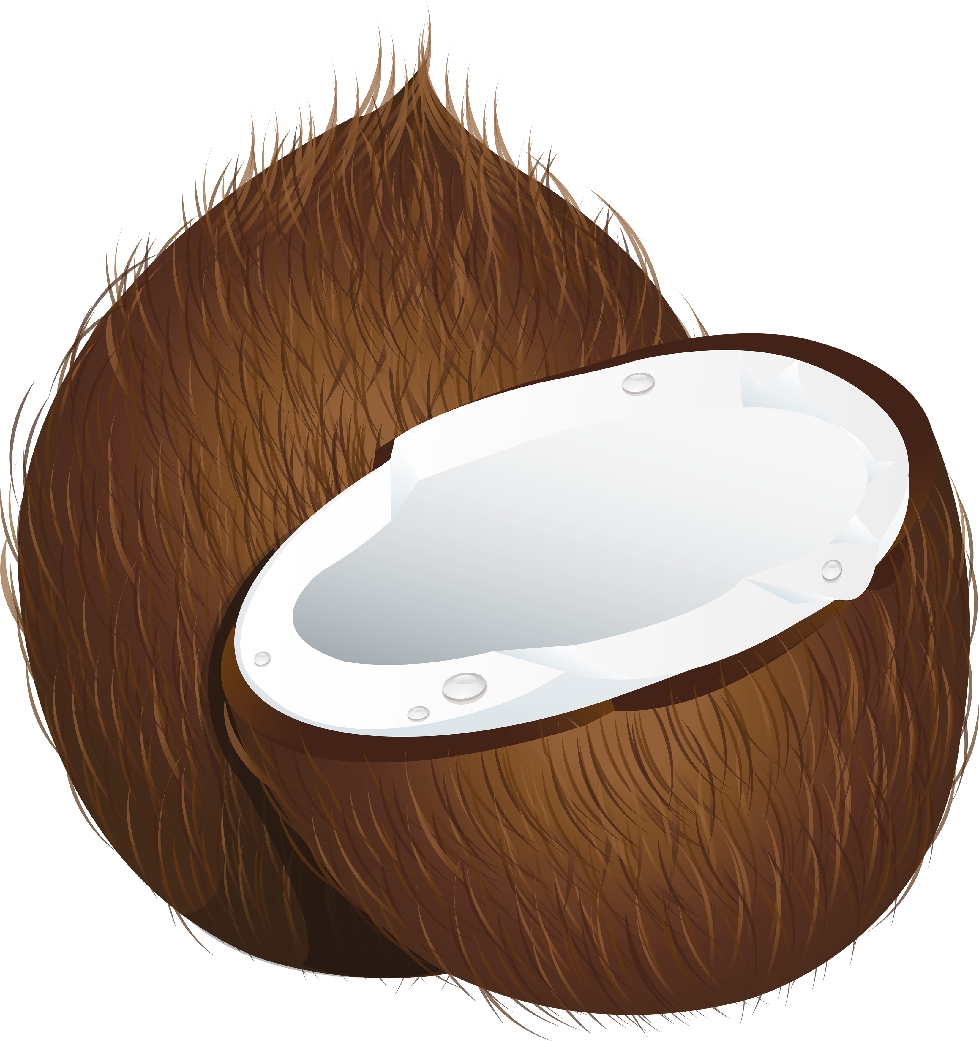 Coconut cliparts clipart stock Free Coconut Cliparts, Download Free Clip Art, Free Clip Art on ... clipart stock