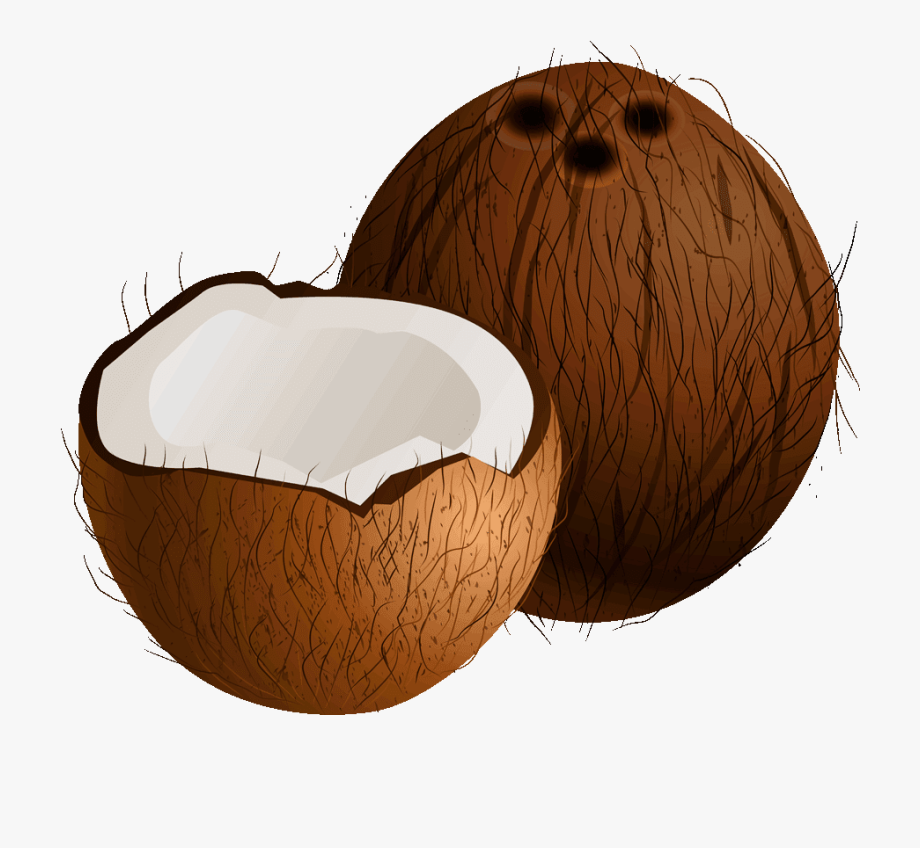 Coconut clipart image clip transparent library Coconut Tree Clipart - Clipart Picture Of A Coconut #383580 - Free ... clip transparent library