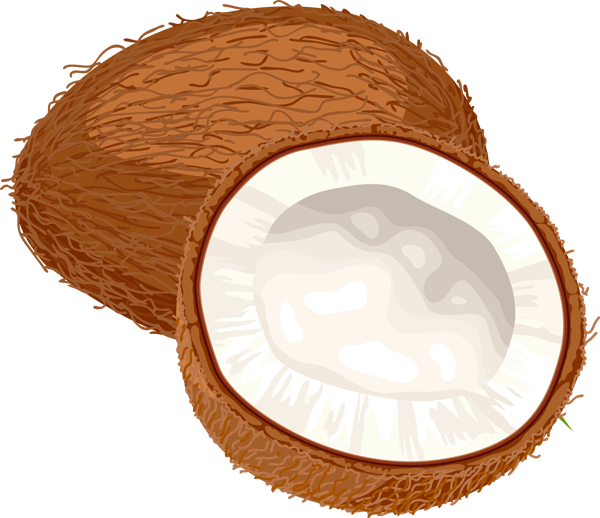 Coconut cliparts clip royalty free stock Coconut Cliparts - Cliparts Zone clip royalty free stock