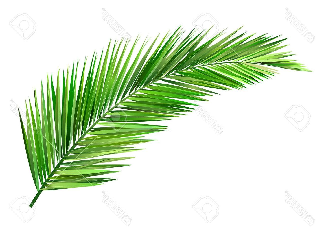 Coconut leaf clipart free stock Best Free Coconut Leaves Vector Cdr » Free Vector Art, Images ... free stock