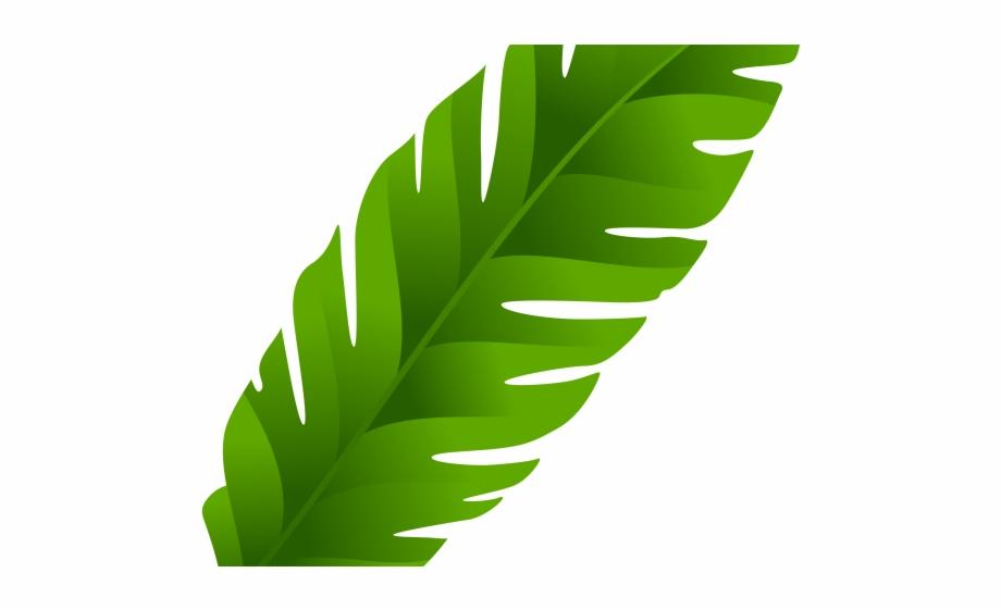 Coconut leaf clipart banner freeuse Coconut Clipart Clear Background - Transparent Background Palm Leaf ... banner freeuse