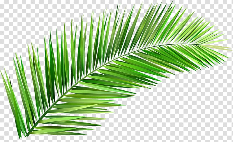 Coconut leaf clipart svg black and white library Green leaf, Arecaceae Coconut Tree Leaf Clay, Leaves transparent ... svg black and white library