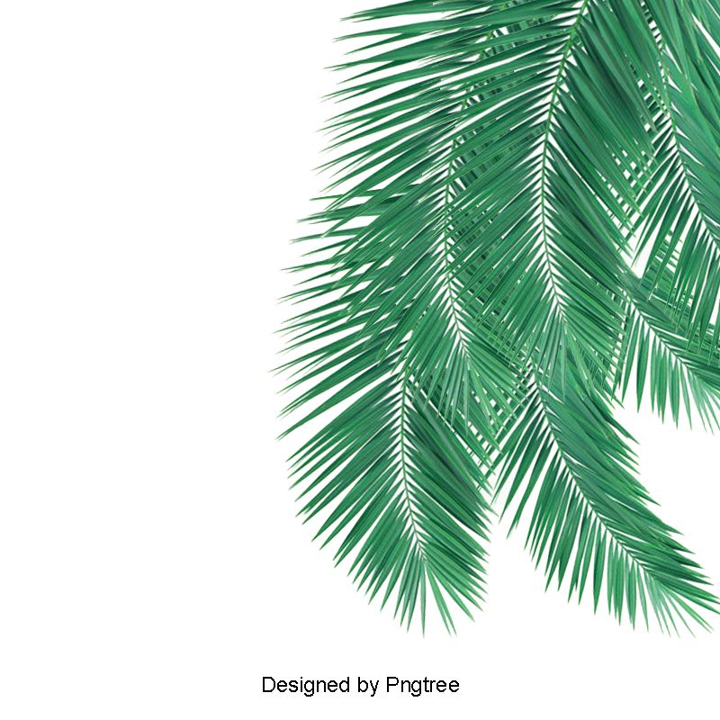 Coconut leaf clipart graphic library download Green Palm Leaves Picture Material, Green Leaves, Green, Plant PNG ... graphic library download