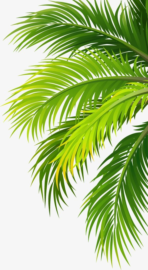Coconut leaf clipart jpg royalty free library Leaves, Coco, Coconut, Trees PNG Transparent Image and Clipart for ... jpg royalty free library