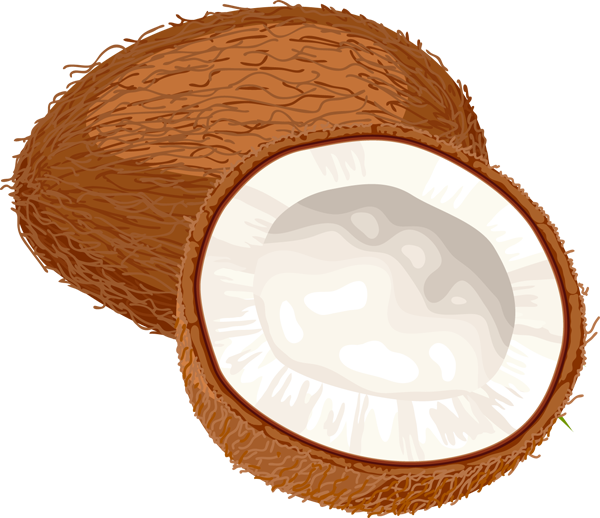 Whole coconut clipart jpg royalty free library Half coconut shell clipart images gallery for free download | MyReal ... jpg royalty free library