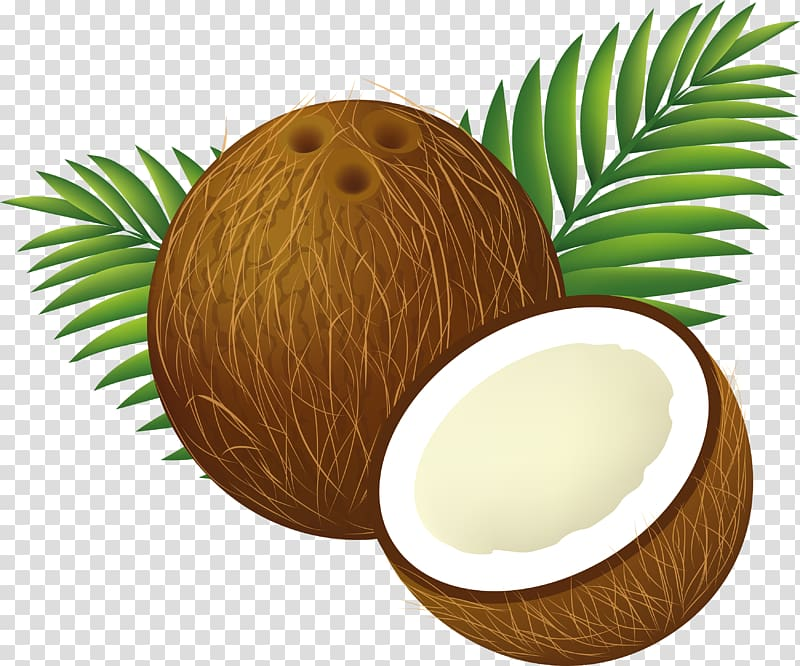 Coconut shell clipart png library library Coconut shell illustration, Coconut water Coconut milk , Coconut ... png library library