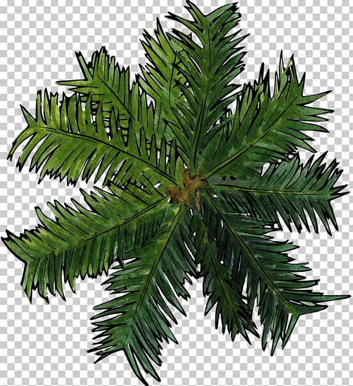 Coconut tree clipart plan picture free download Coconut Tree Top View PNG, Clipart, Coconut, Coconut Clipart ... picture free download