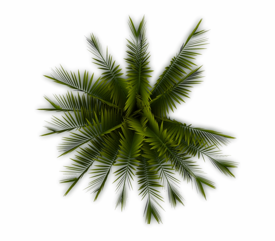 Palm tree plan clipart banner black and white stock Tree Plan Png Free Download - Palm Trees Top View Png Free PNG ... banner black and white stock