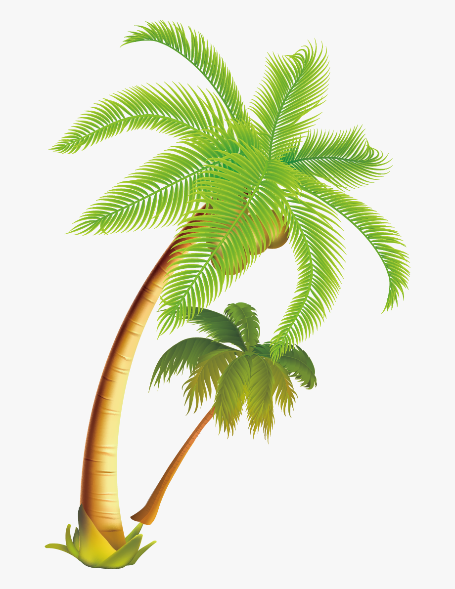 Coconut tree clipart plan clip royalty free download Coconut Tree Png - Coconut Tree Vector Png #383313 - Free Cliparts ... clip royalty free download