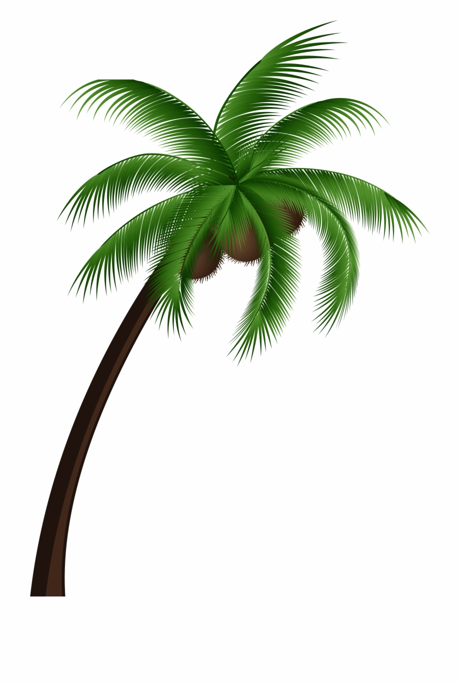 Coconut tree clipart plan clip black and white stock Coconut Palm Tree Png Clip Art - Coconut Tree Vector Png ... clip black and white stock
