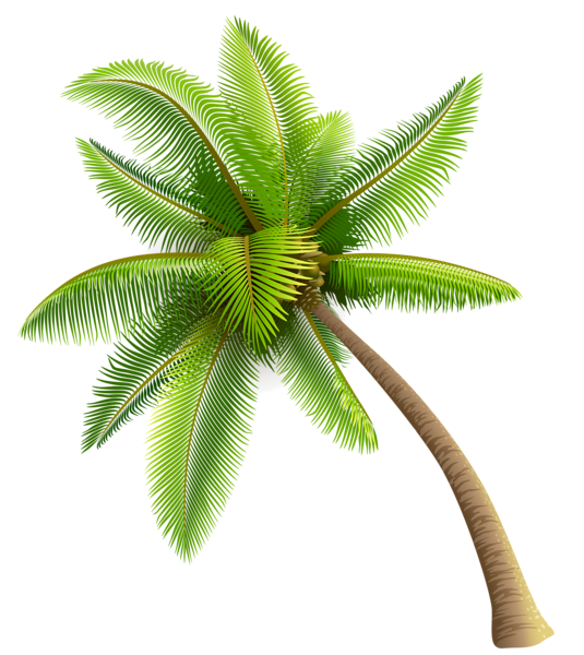 Palm tree with coconuts clipart royalty free Green Palm Tree PNG Clipart | Planner Happiness | Pinterest | Palm ... royalty free