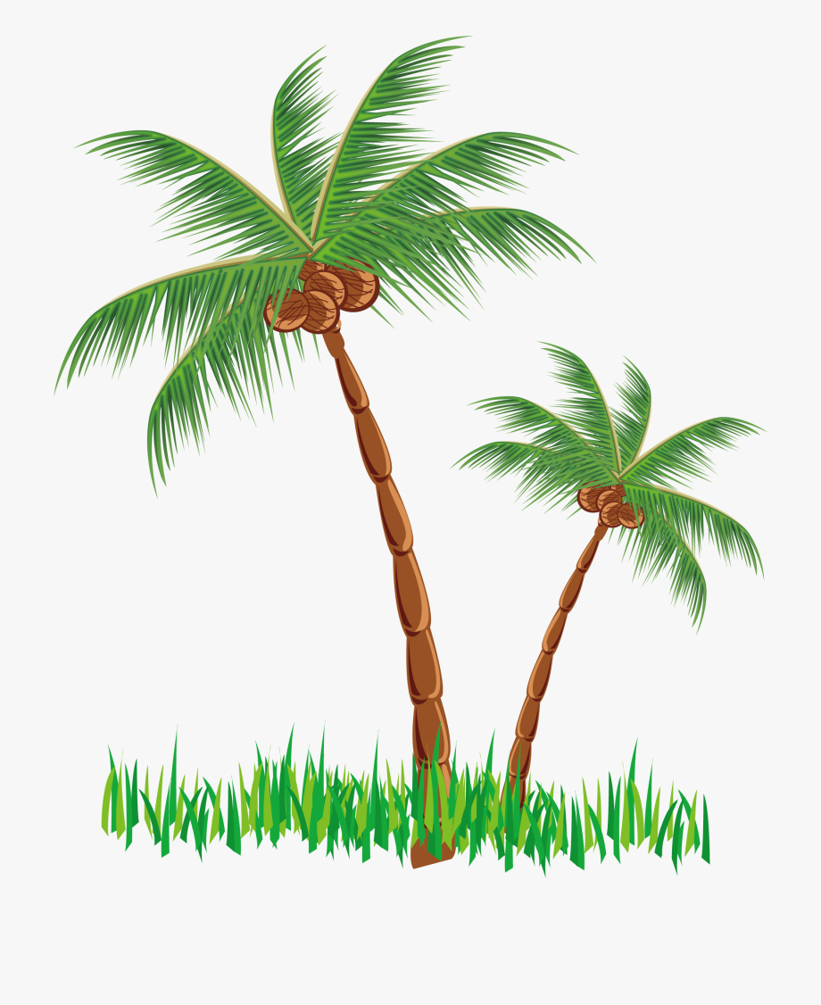 Coconut trees clipart image transparent Coconut Tree Clipart Png #1421165 - Free Cliparts on ClipartWiki image transparent