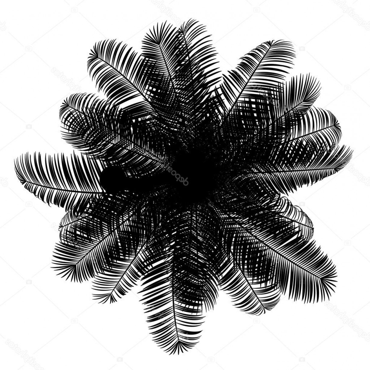Coconut tree clipart plan picture free download Stock Photo Top View Silhouette Of Coconut | SOIDERGI picture free download