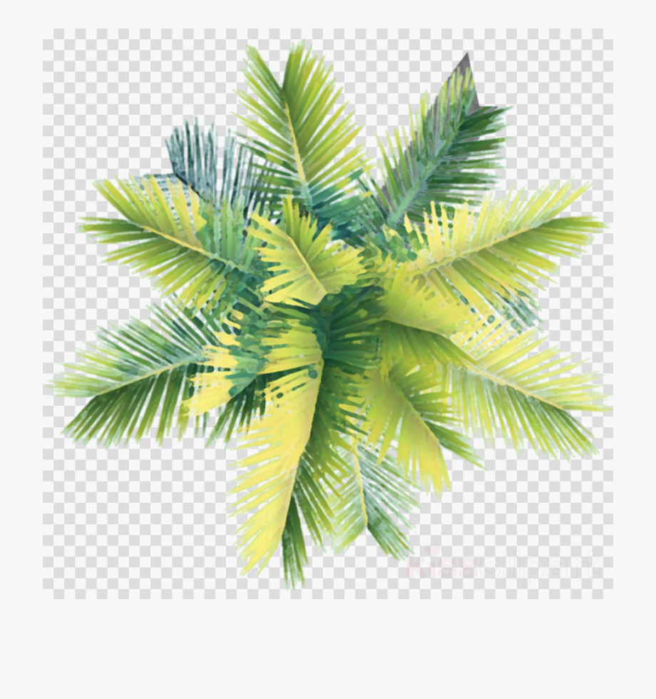 Palm tree clipart plan clipart stock Trees Png Plan - Palm Tree Plan Png #309624 - Free Cliparts ... clipart stock