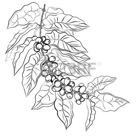 Coffee leaf clipart vector freeuse stock Image result for coffee leaf drawing | drawing in 2019 | Coffee ... vector freeuse stock