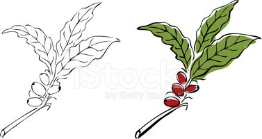 Coffee leaf clipart svg royalty free library Coffee Tree stock vectors - Clipart.me svg royalty free library