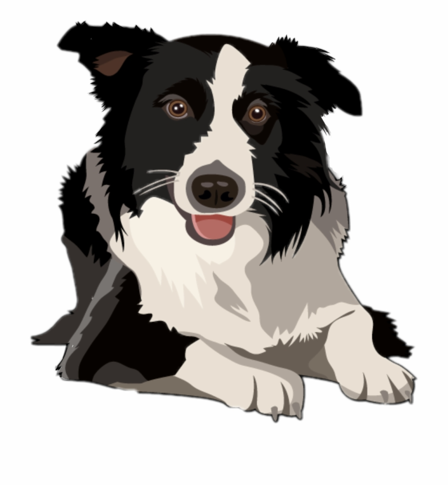 Free border collie clipart png library download dog #bordercollie #border Collie #freetoedit - Border Collie Clipart ... png library download