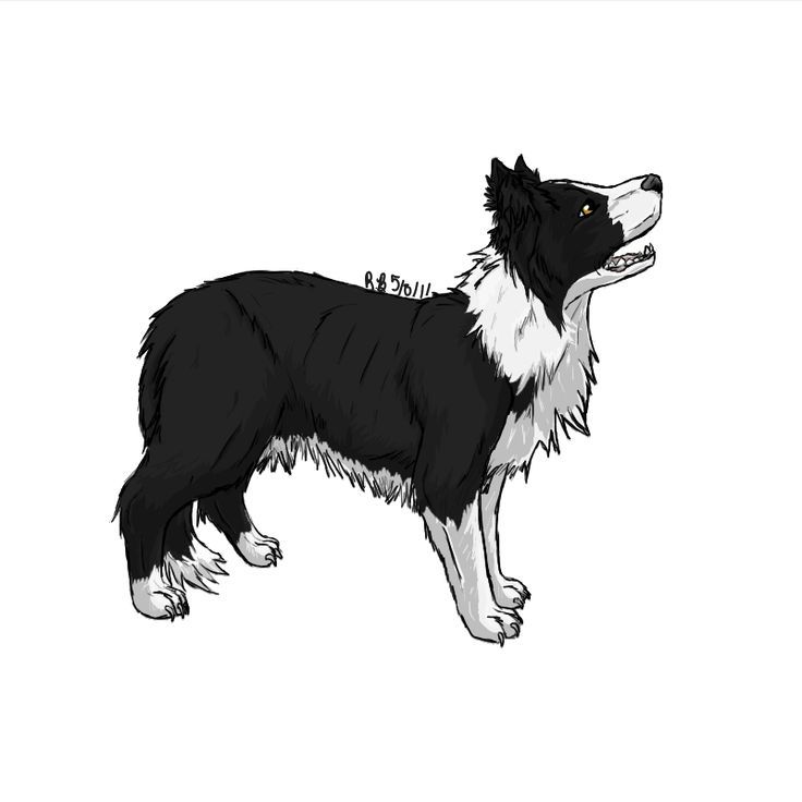 Free border collie clipart image black and white Border Collie Clipart | Free Download Clip Art | Free Clip Art ... image black and white