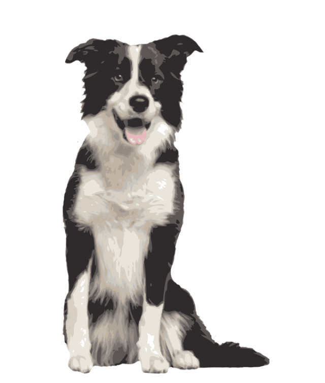Collie dog clipart vector royalty free Border Collie Clipart at GetDrawings.com   Free for personal use ... vector royalty free