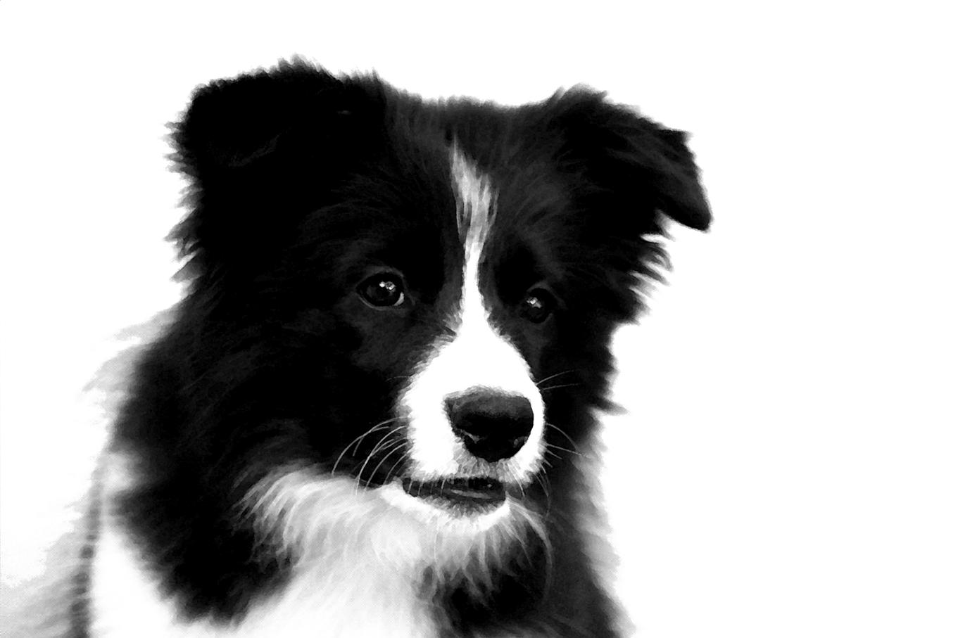 Collie dog clipart picture royalty free library Border Collie PNG Photos picture royalty free library