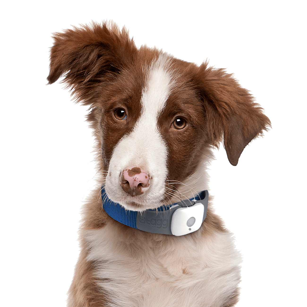 Collie dog clipart vector transparent library 77 Dog Png Image Picture Download Dogs vector transparent library