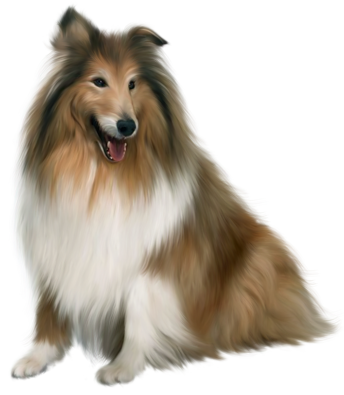 Collie dog clipart clip black and white library Painted Scotch Collie Dog PNG Picture Clipart   Gallery ... clip black and white library