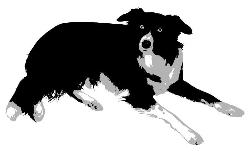 Collie dog clipart svg library library Clipart - Border Collie svg library library
