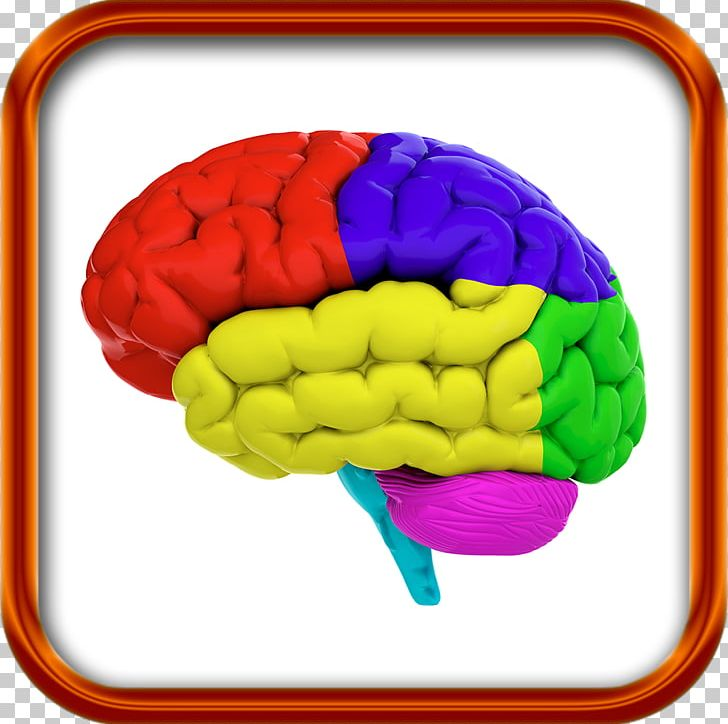 Color brain clipart image black and white stock Lobes Of The Brain Stock Photography Human Brain Color PNG, Clipart ... image black and white stock
