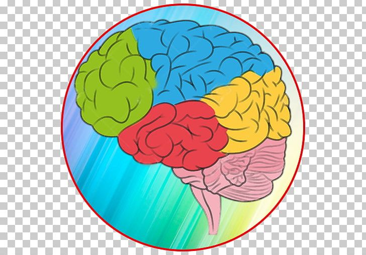 Color brain clipart png library Human Brain Color Human Anatomy PNG, Clipart, Anatomy, Area, Brain ... png library