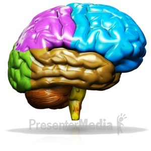 Color brain clipart freeuse download Brain Trap - Presentation Clipart - Great Clipart for Presentations ... freeuse download