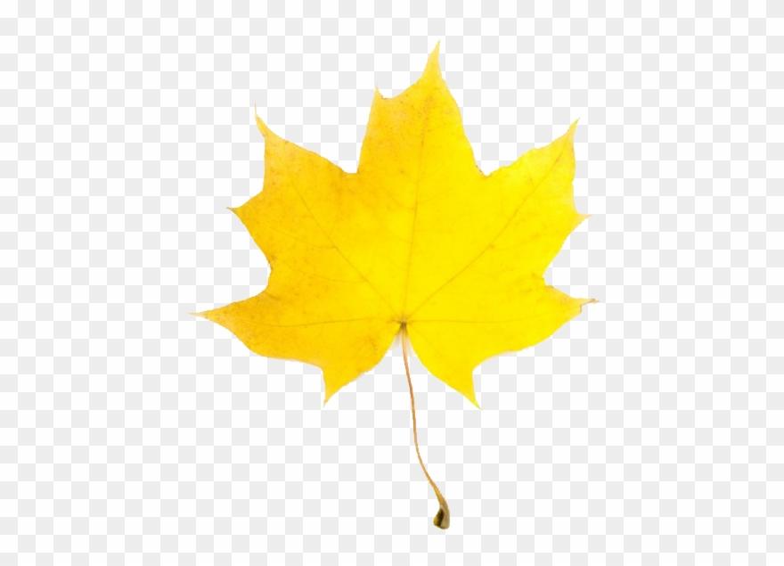 Colorful fall leaves clipart freeuse Fall Leaves Clip Art Free Borders Clipart Panda - Yellow Fall Leaf ... freeuse