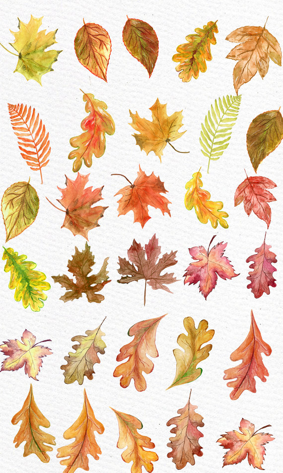 Colorful fall leaves clipart clip free download Watercolor Leaves Clipart: \