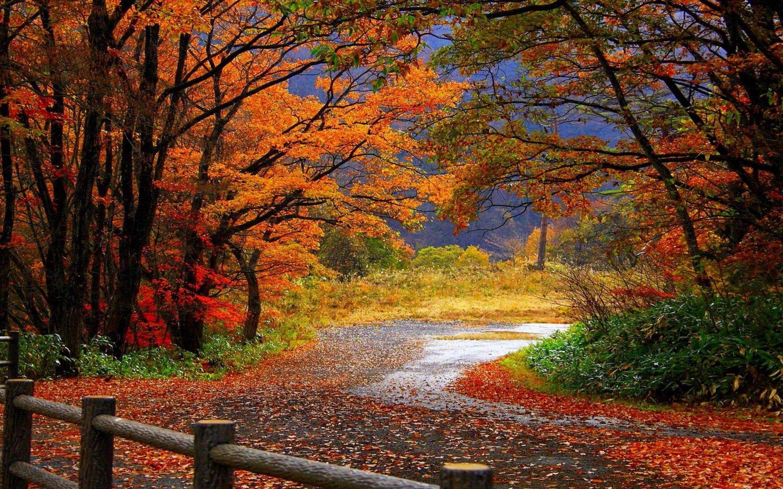 Colorful landscape clipart clip art royalty free Colorful Autumn Landscape Wallpaper   Gallery Yopriceville - High ... clip art royalty free