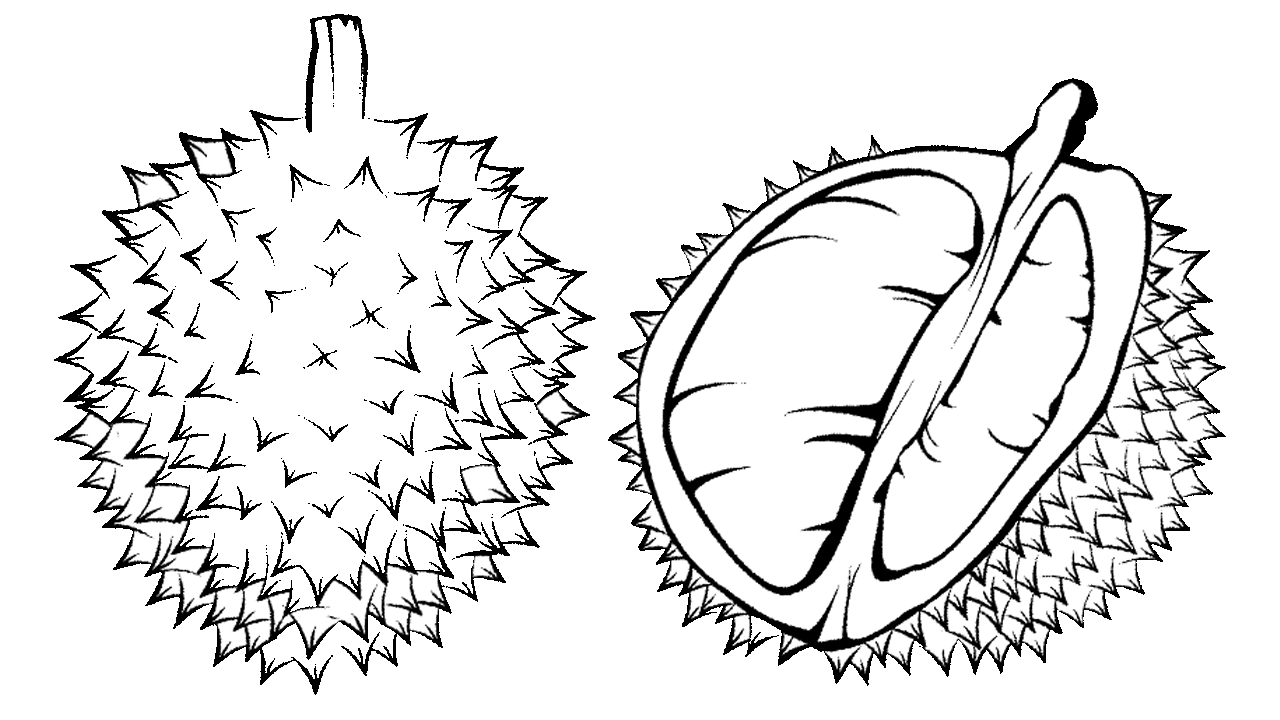 Coloring book Durian Black and white Child Clip art - Durian 1280 ... clip art freeuse stock