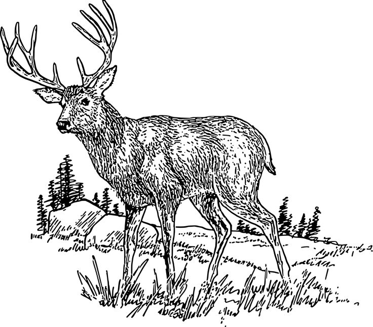 Coloring book grass in field clipart clipart freeuse download 17 Best images about Deer on Pinterest | Animal coloring pages ... clipart freeuse download