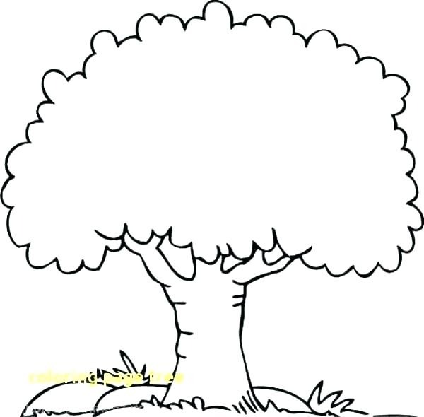Coloring page of a oak tree clipart png transparent free printable oak tree coloring pages – amconstructors.com png transparent
